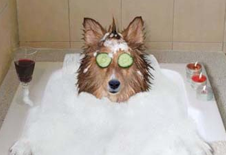 "TPF to Offer ""Pet Bather & Brusher"" Certification"